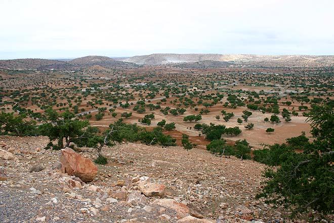 Maroc, Arganiers