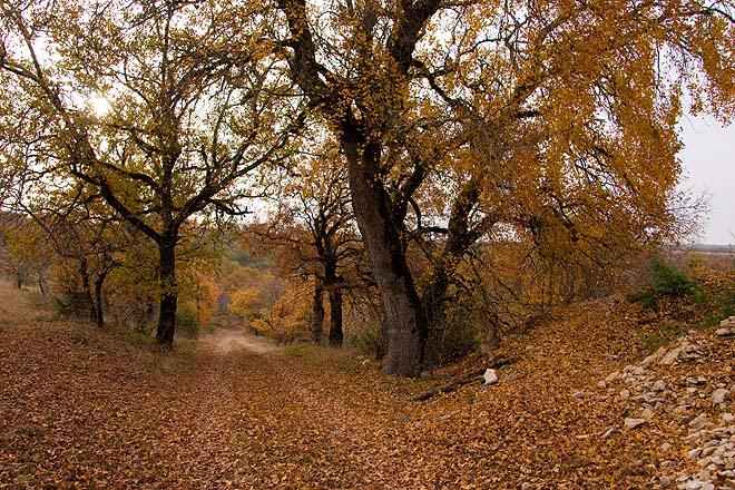Le Montat, chemin près de Quercy
