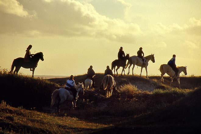 29 Plomeur, chevaux des dunes